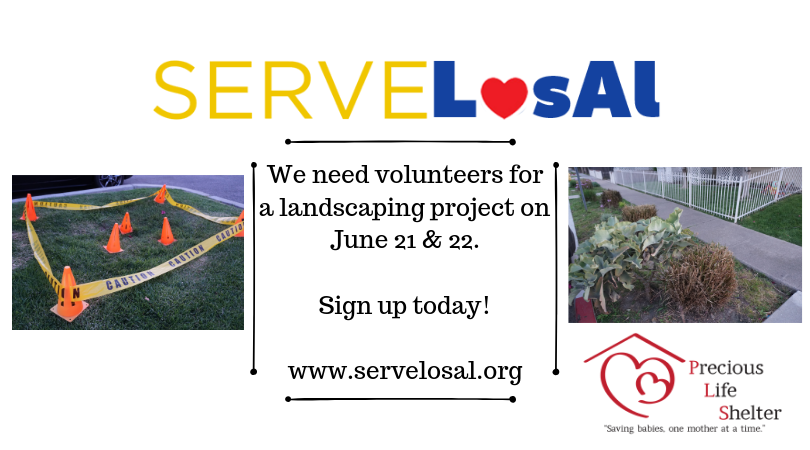 Copy of serve los al website.png