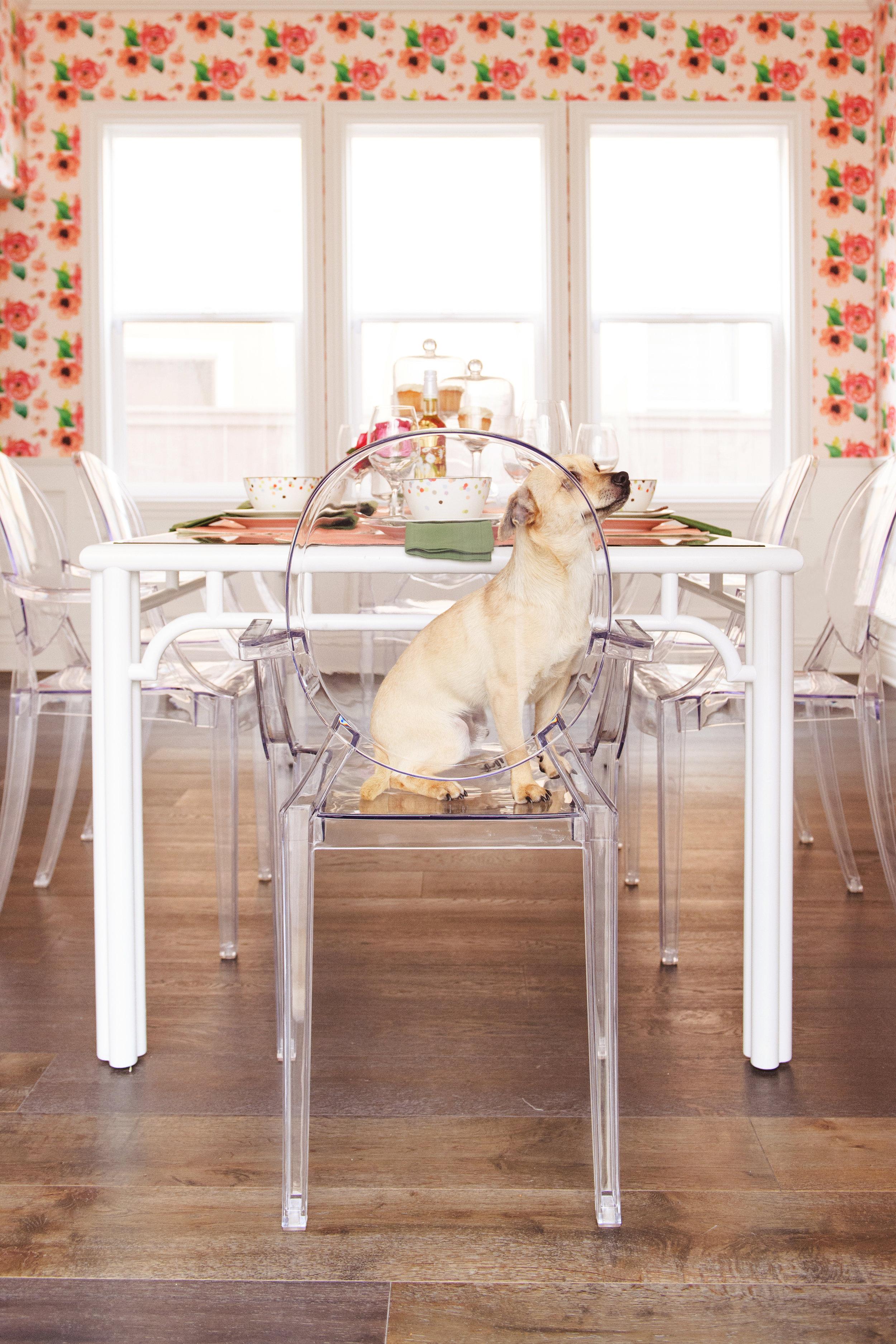 savvy{chinnock}puppy-005.jpg