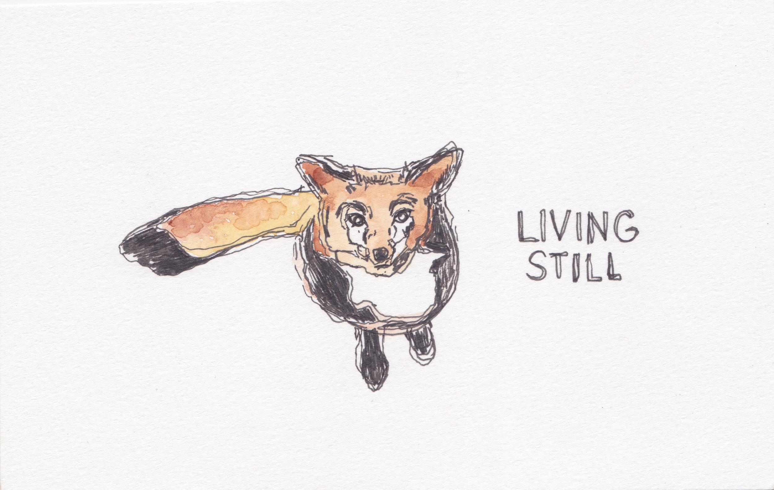 foxlivingstill.jpg
