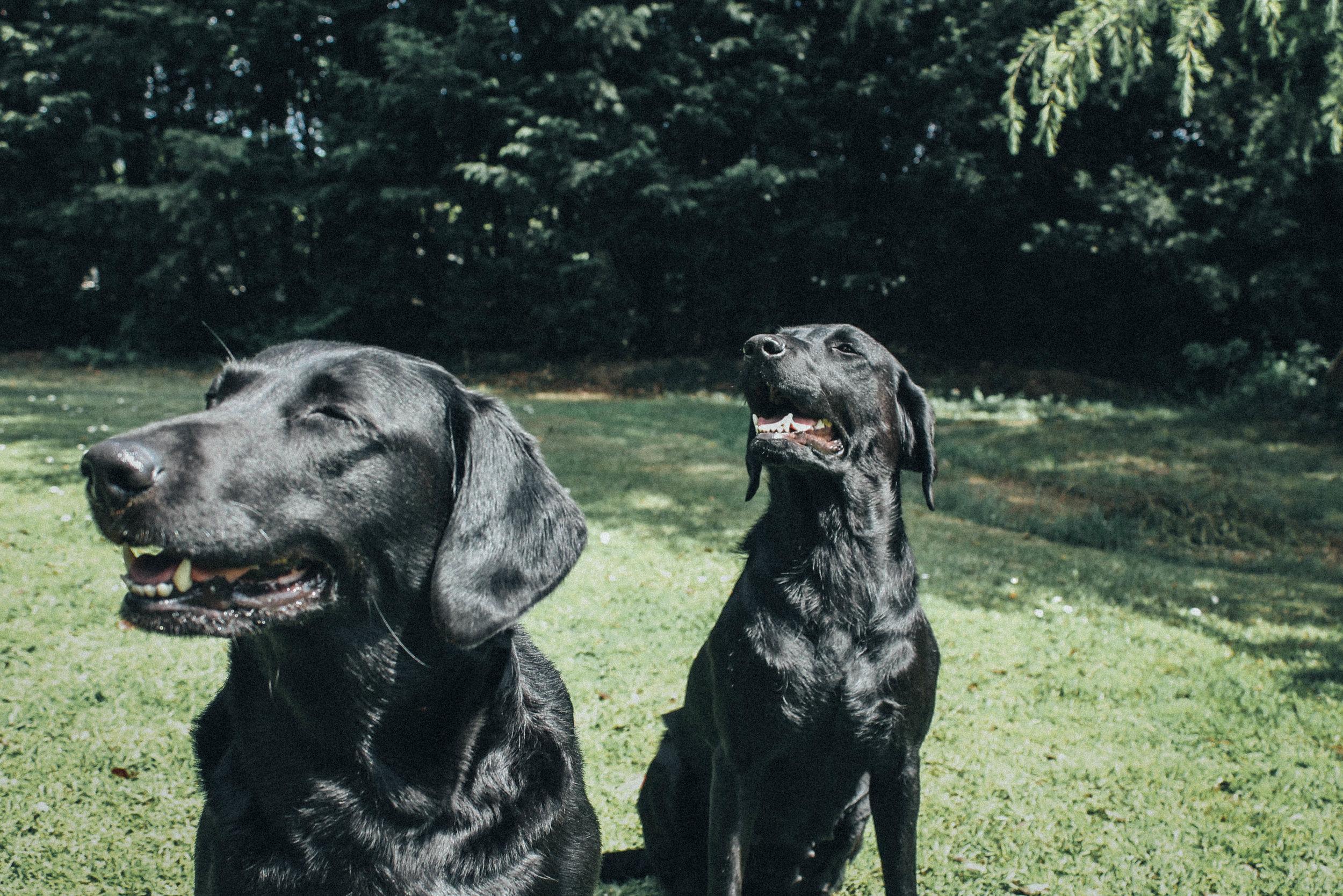 cute dogs 3-1.jpg