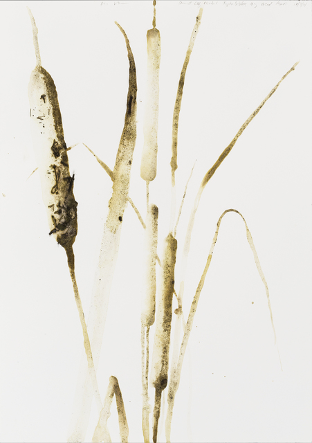 "BROADLEAF CATTAIL (TYPHA LATIFOLIA) BY ALEXIS ROCKMAN, 2014; SOIL FROM BIG REED POND AND ACRYLIC POLYMER ON PAPER, 20"" X 14"" COURTESY OF THE ARTIST"