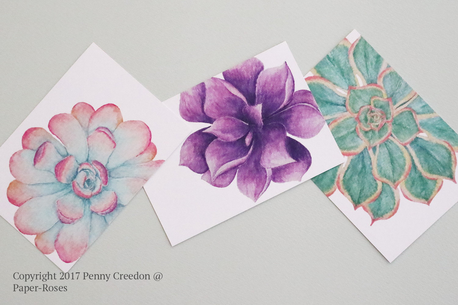 Paper-Roses | Succulents note card collection