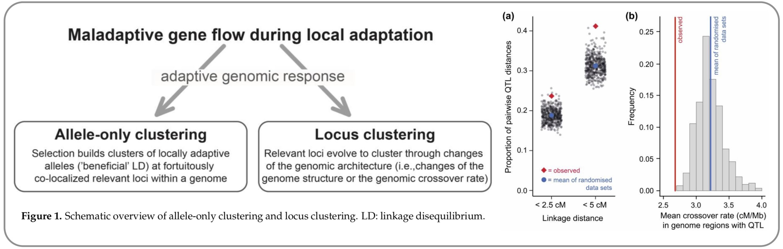 Do adaptive loci cluster within a genome to better resist gene flow?  In this paper, I summarize  ideas of why, how and where in a genome adaptive loci should become clustered  when local adaptation occurs in the presence of maladaptive gene flow. I argue that although there are many convincing theoretical arguments, we have a poor empirical understanding about where in a genome the adaptive loci are actually located. Even though genome regions of low recombination appear as promising hotspots for adaptive loci to cluster, observed patterns of 'clustered loci' are often likely to be explained by  detection biases of popular empirical approaches  (e.g.,  population genome scans  and  QTL mapping) . I use hundreds of previously published QTLs from threespine stickleback fish to demonstrate this bias, and then suggest promising future avenues of how to get around these problems  (   Roesti 2018   )