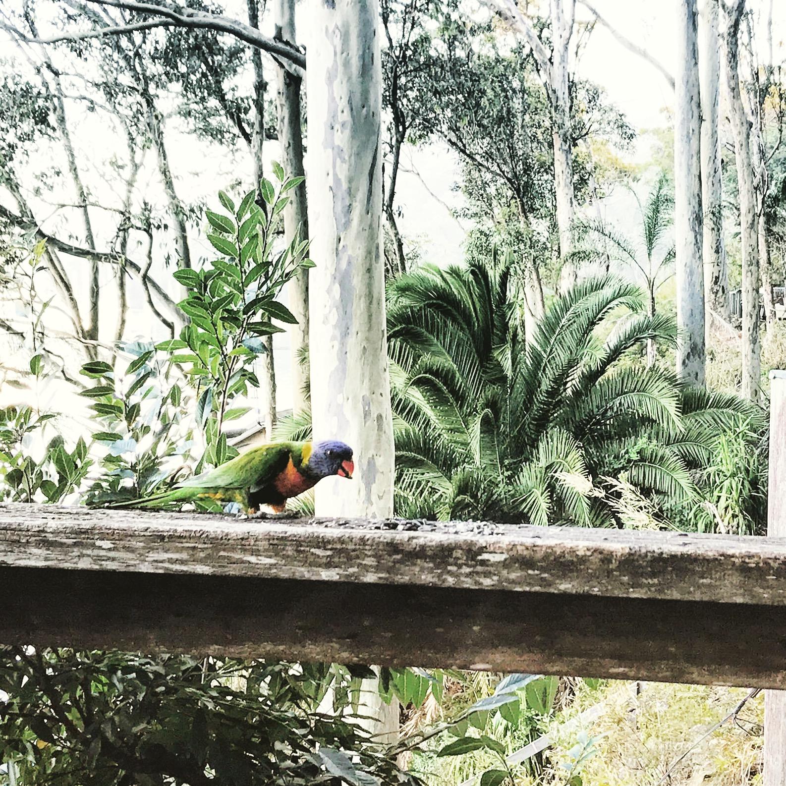 Birdfeeding on the caretakers balcony.jpg