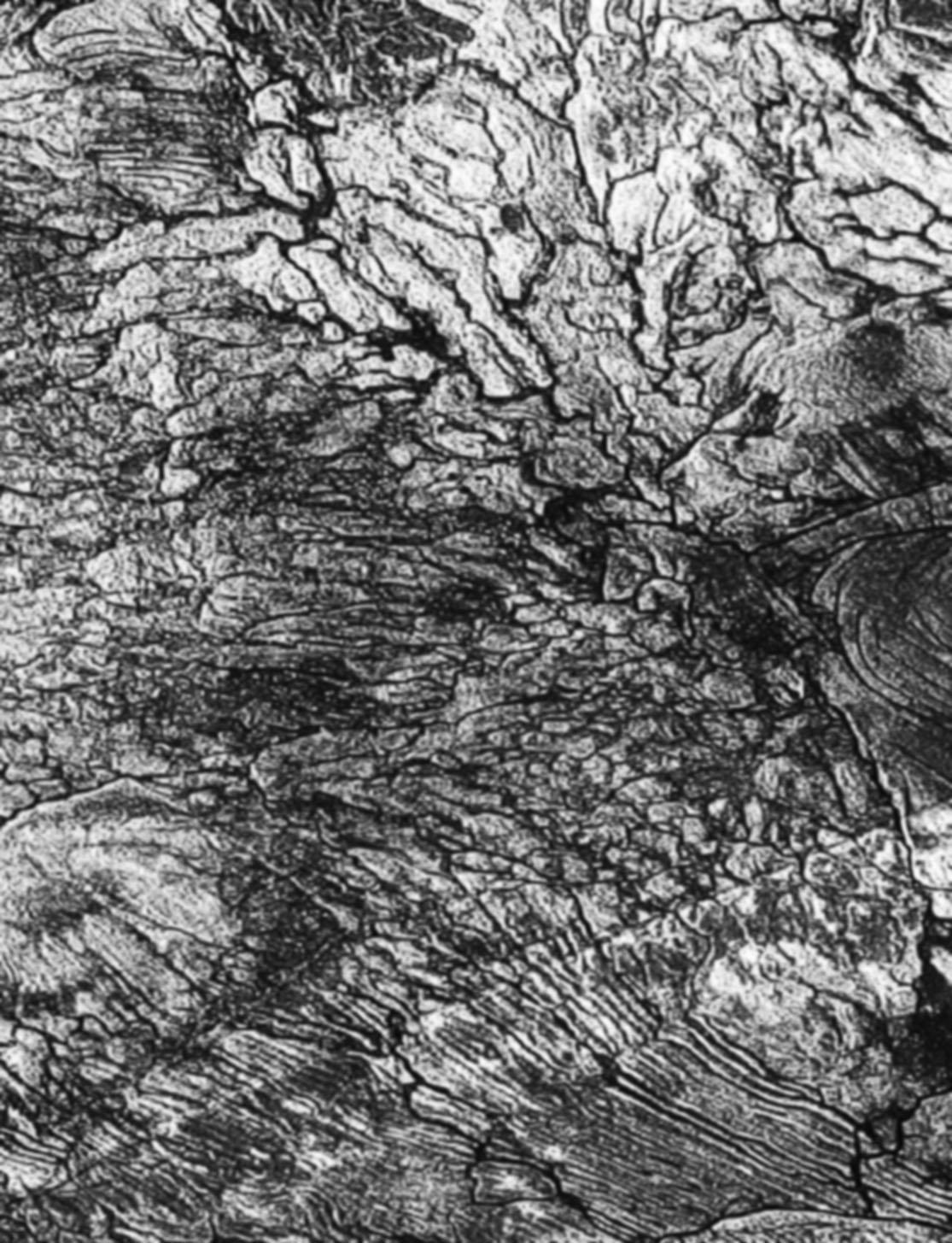 Shaun Fraser - Untitled, Screen print 01.png