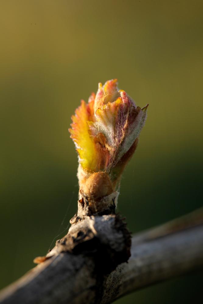 jeremyfenske_photography_video_cameron_winery-0274.jpg