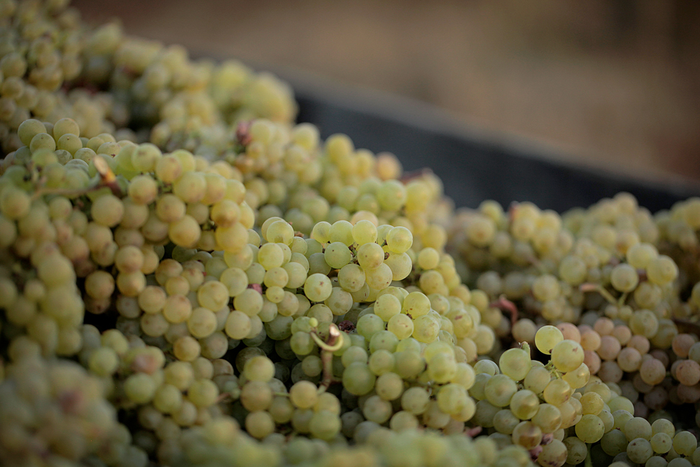 jeremyfenske_photography_video_cameron_winery-7906.jpg