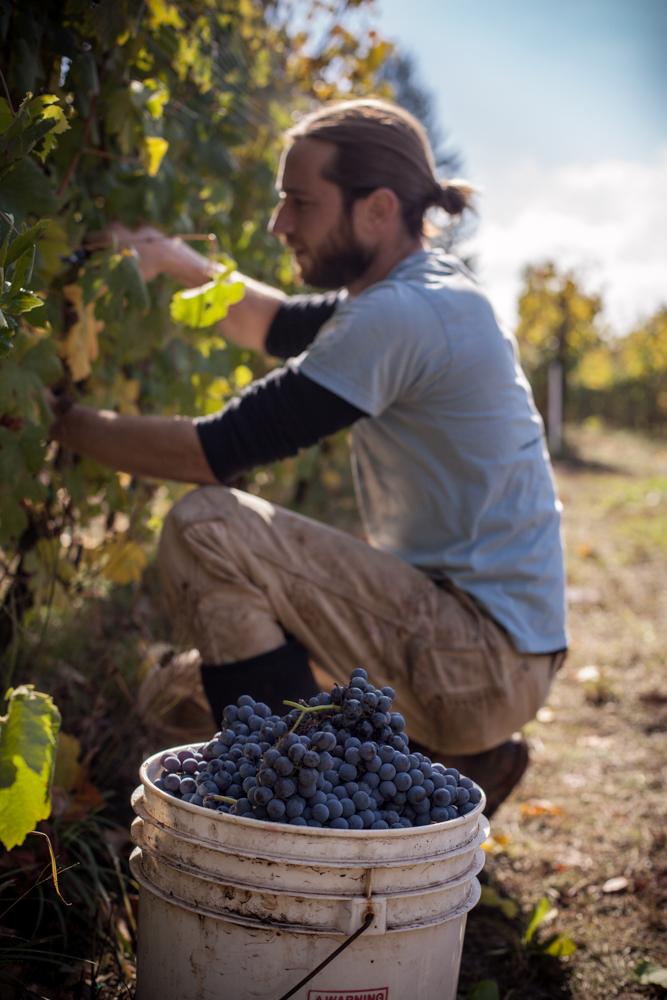 jeremyfenske_photography_video_cameron_winery-8881.jpg