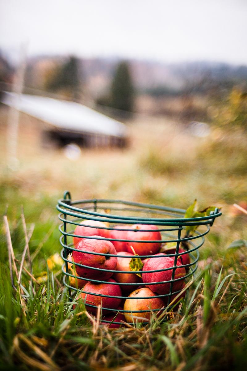 jeremyfenske_photography_video_big_table_farm-9491.jpg