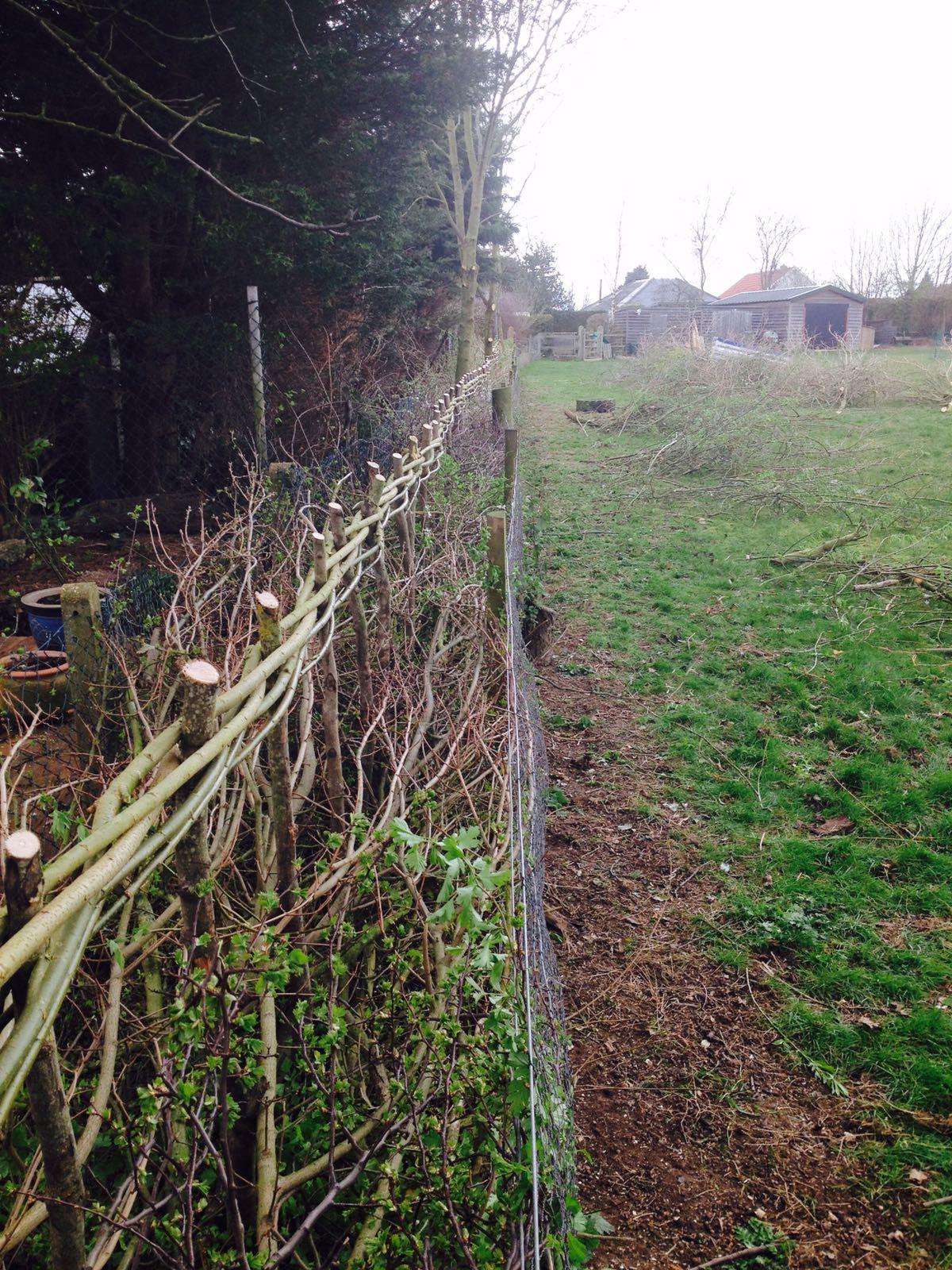 Hedge laid by WonderWood