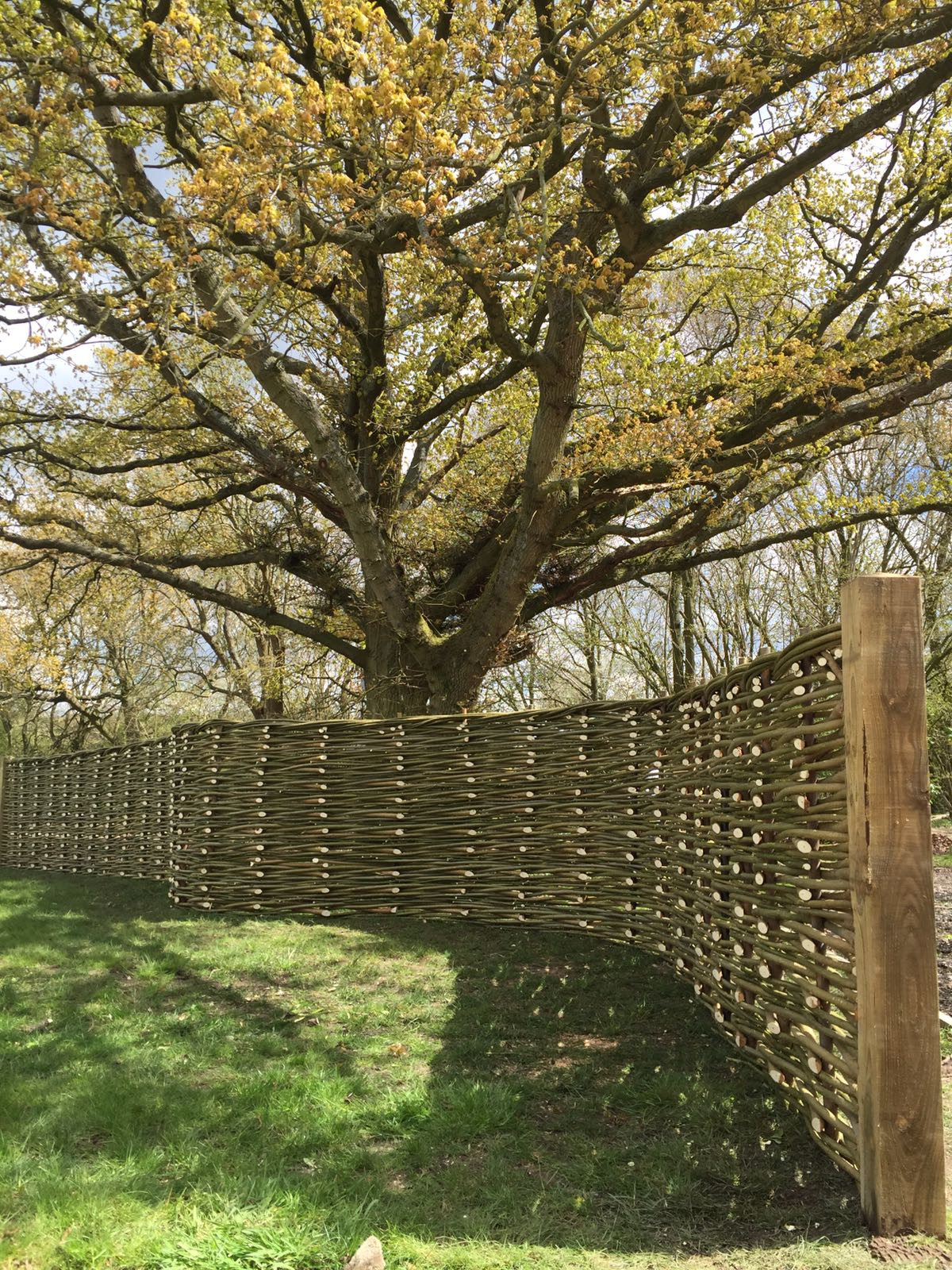 Natural willow fence