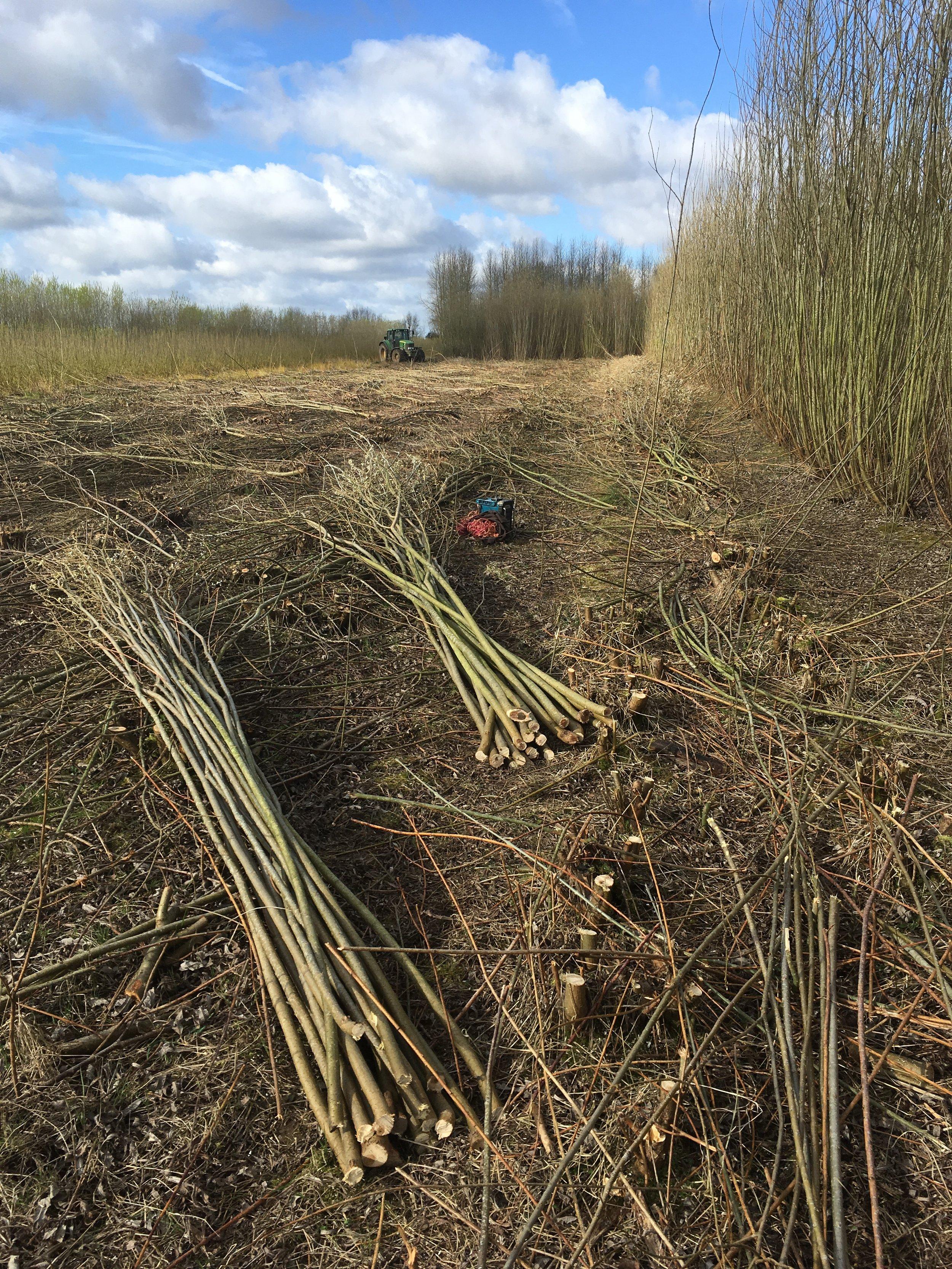 Sorted willow bundles