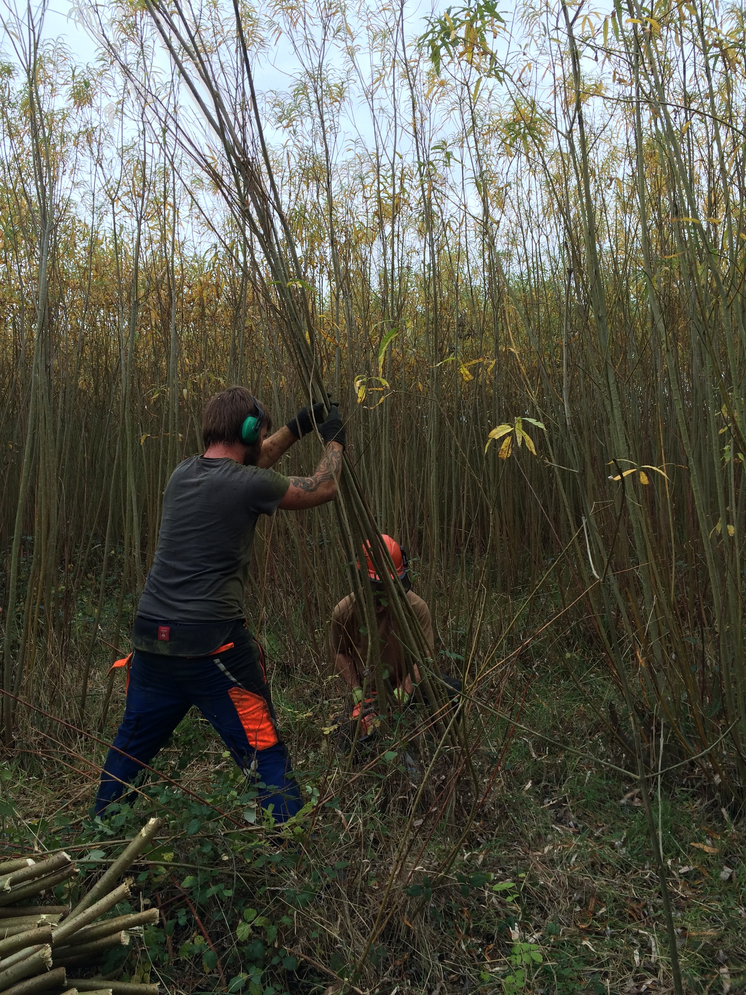 Leo and Tudor Cutting Willow