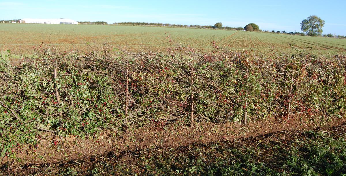 Lancashire and Westmoorland
