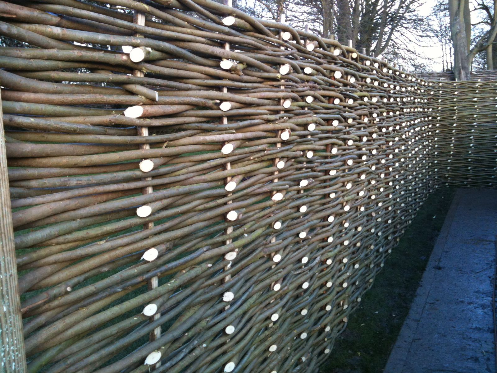 'The backs' Woven Willow