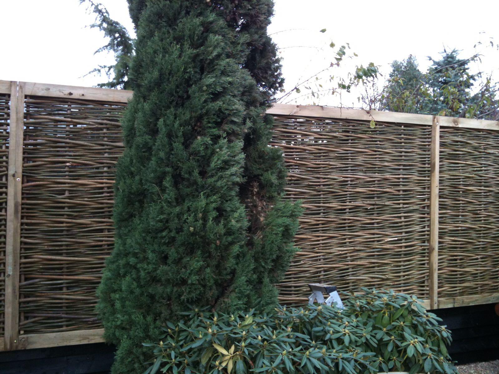 Woven willow frames