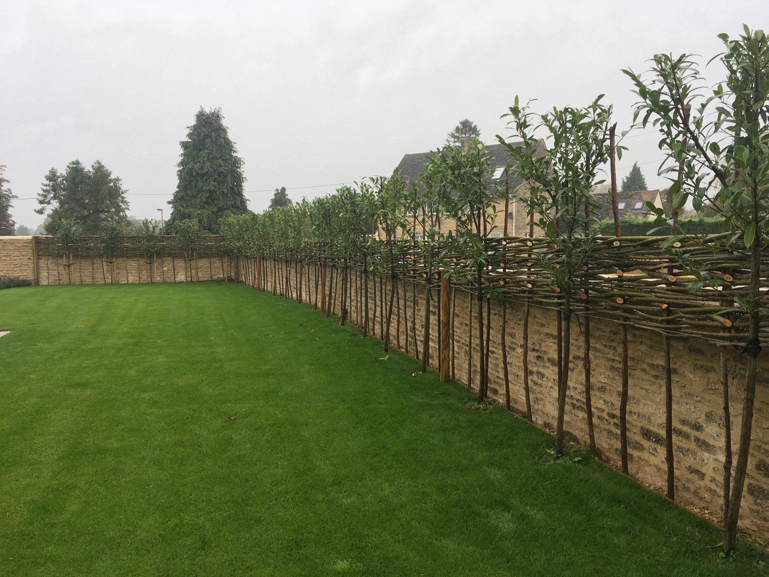 Wicker fencing
