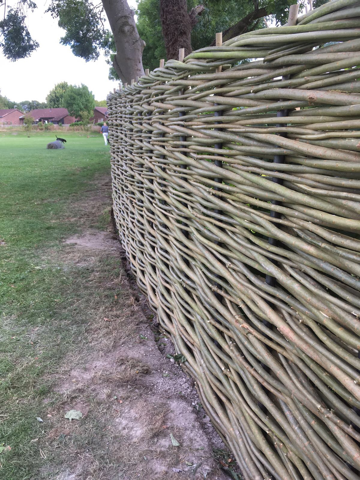 Woven willow fencing
