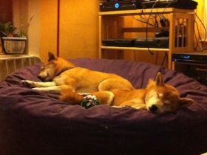 Once your dogs can sleep through the sound, you are generally in good shape.