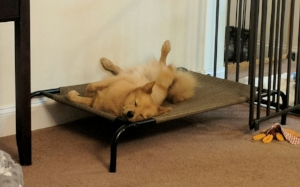 Reinforcing a calm down on a bed is important, even if it's not graceful.