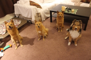 This is the whole gang in my living room one month after Sonya came home.
