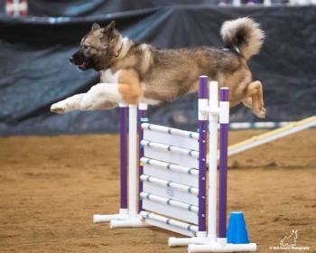 Deborah Karfs' Lolo going over a panel jump; photograph copyright Rich Knect Photography