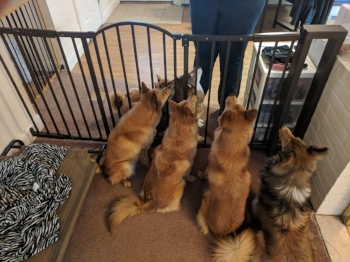 All dogs at attention! They know Molly has some good treats in her hands!