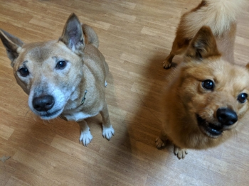 Journey and Bubbles posing for the camera!