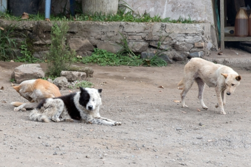 Feral, stray, village, and street dogs all give space to dogs they don't want to engage with. In a house they don't have that luxury. When you can't get away from someone you don't like, what happens? I'm pretty sure that's what reality tv is all about.
