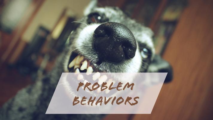 problem behaviors.jpg