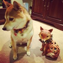 buttons and fox.jpg