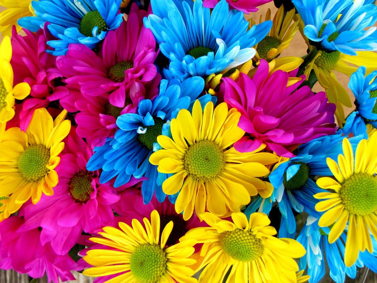 daisiescolor.jpg