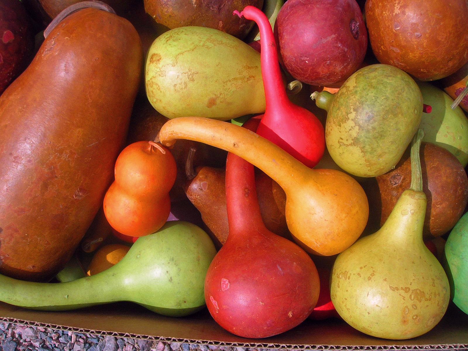Asstd Dyed Gourds_edited-1.jpg