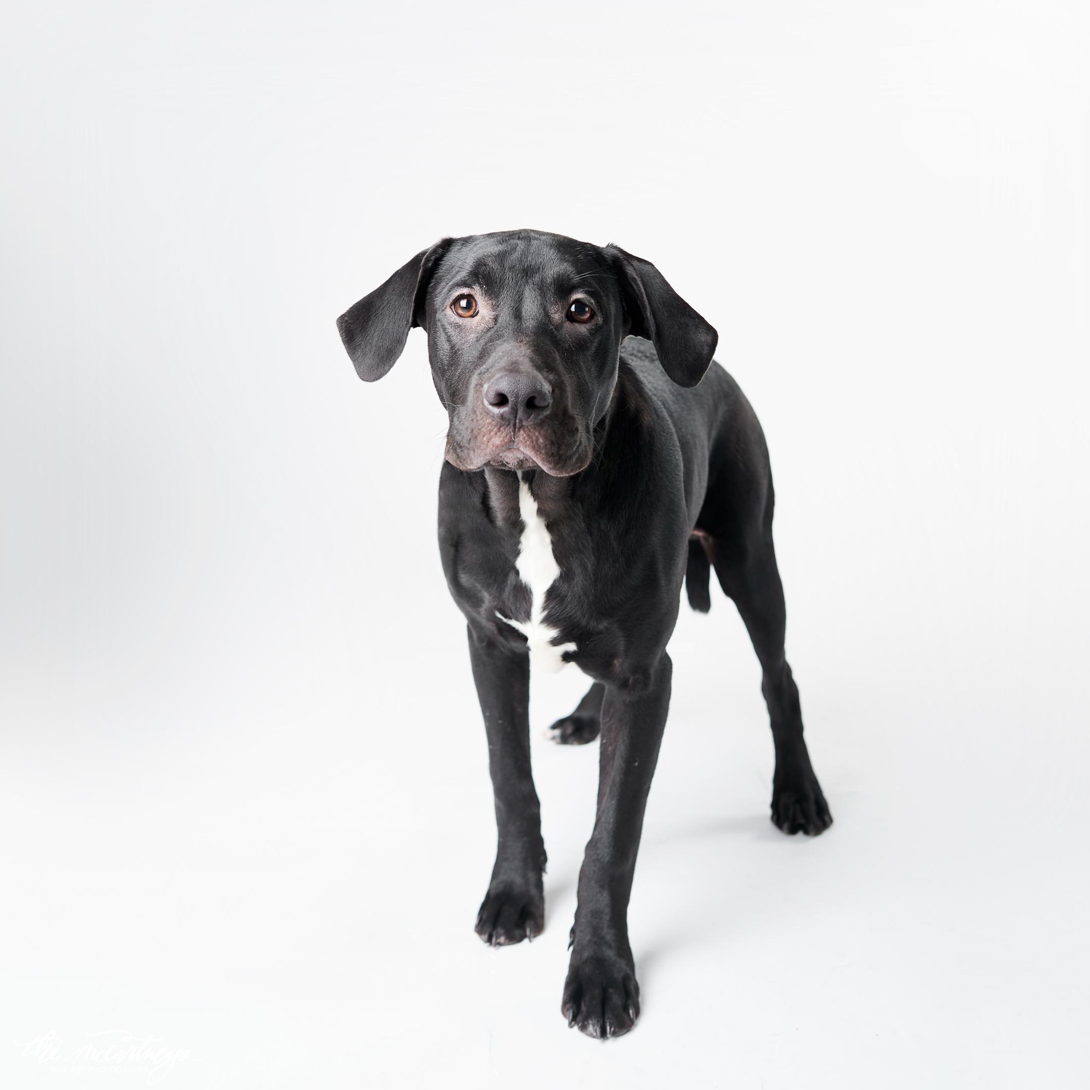 Humane Society - EVERY DOG DESERVES A HOME