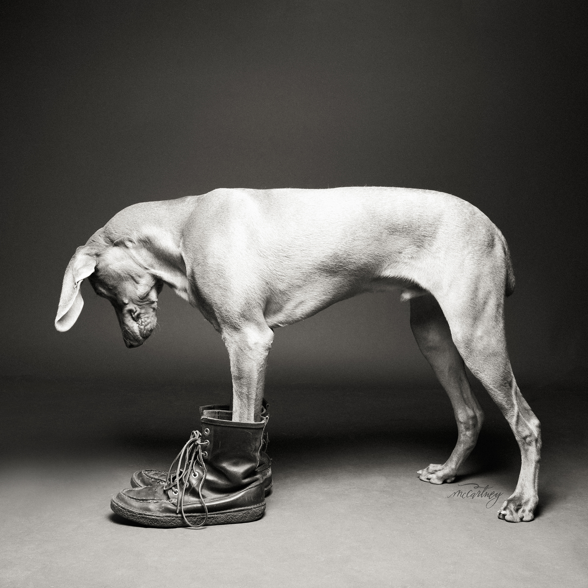 Dogs Wearing Shoes -