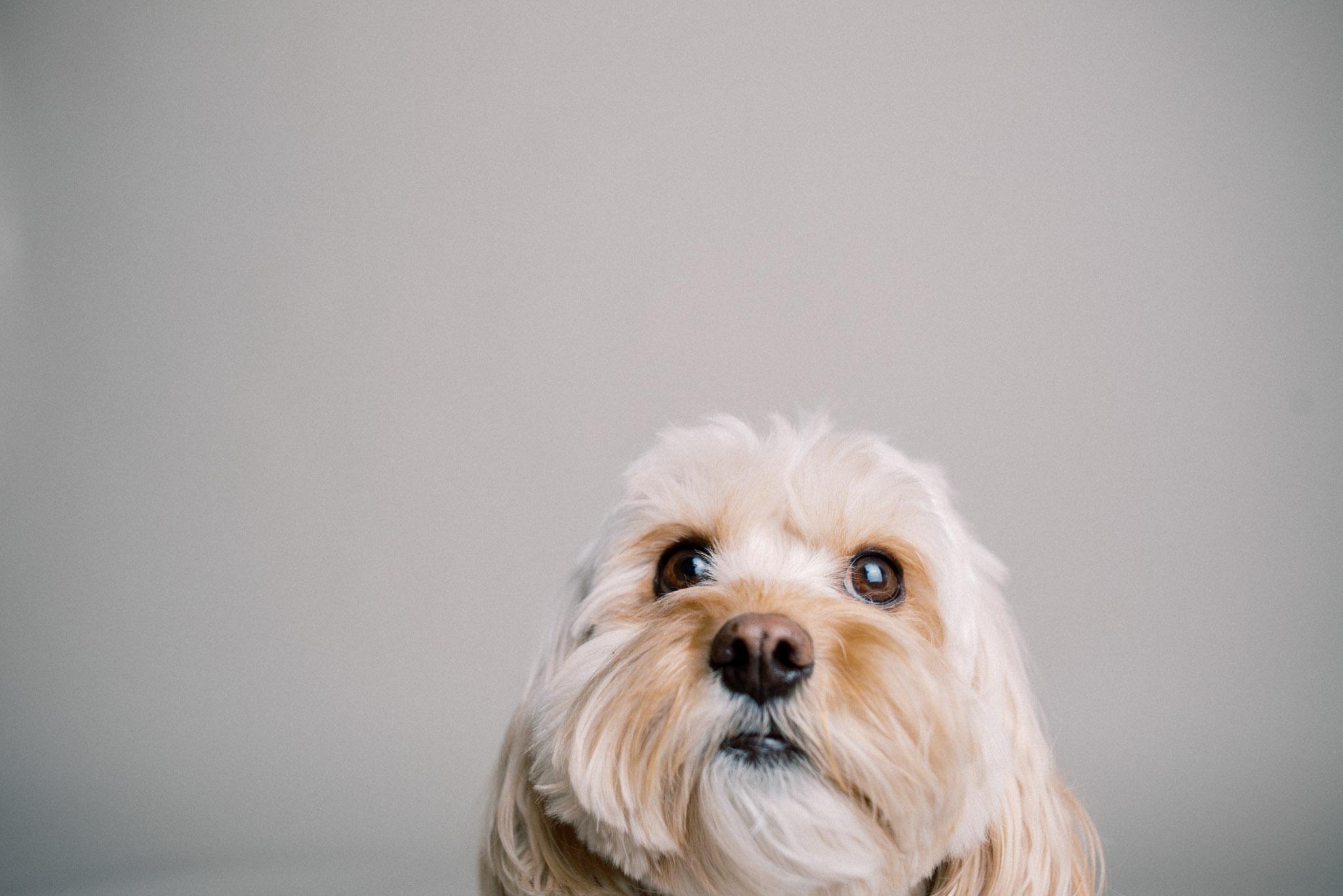 wisconsin-dog-photographer-38.jpg