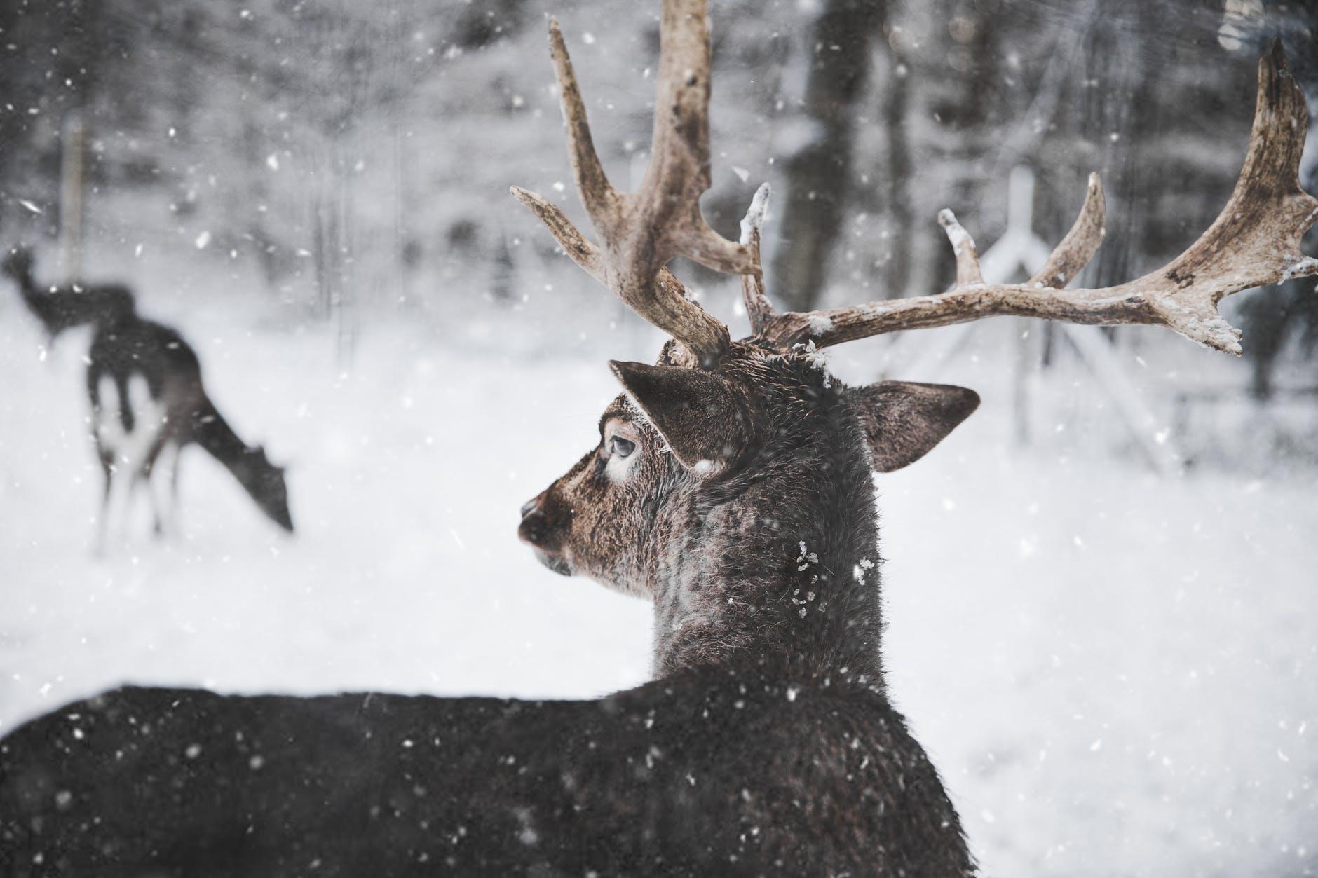 arctic5.jpeg