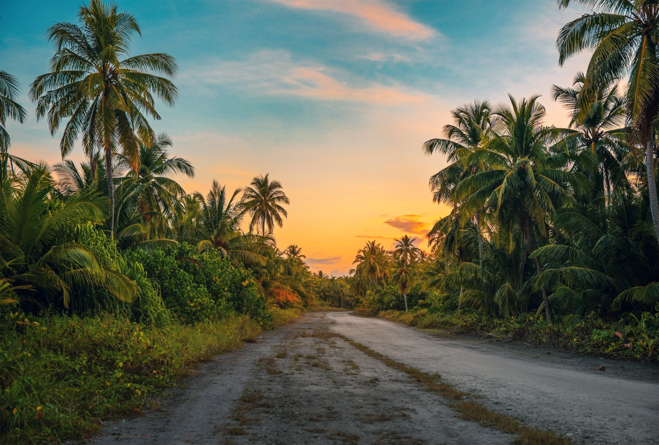 coconut-trees-dawn-daylight-1033729.jpg