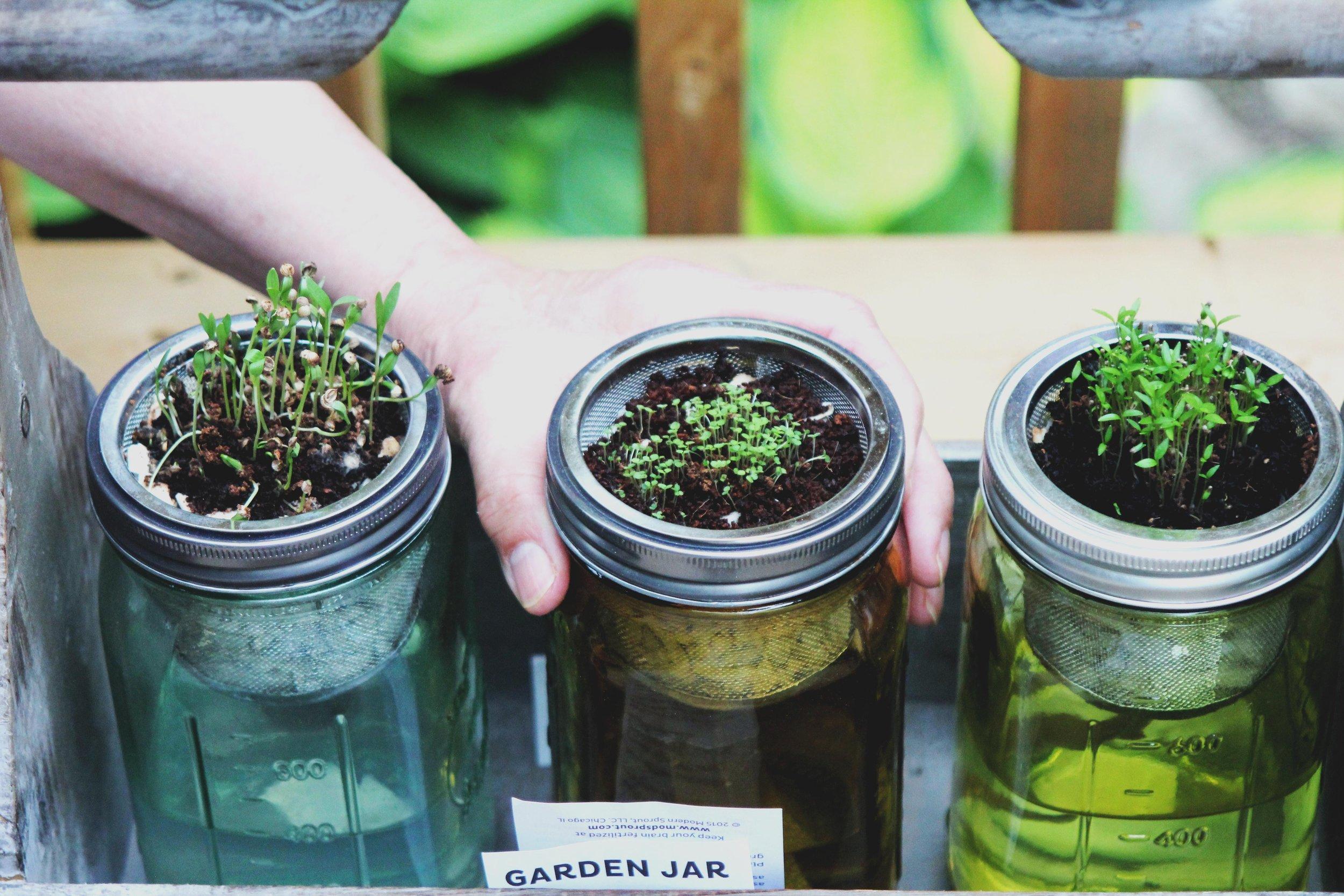 plants jars.jpg