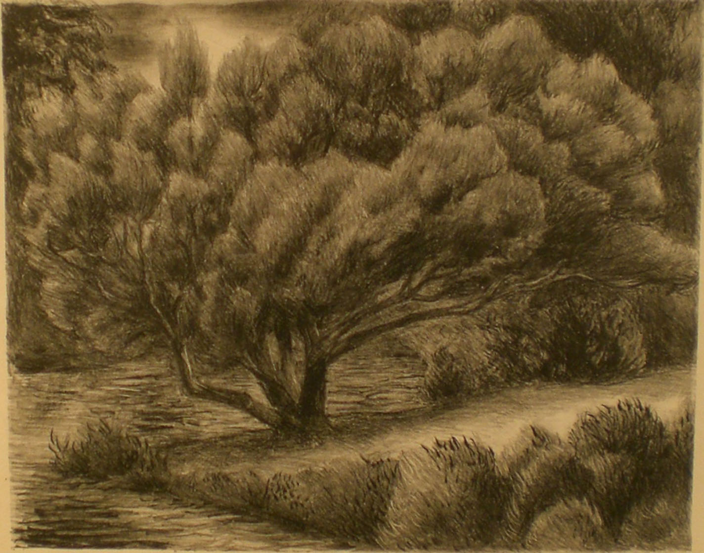Juniper Tree , 20¾ x 18  Pathways Original Print Collection
