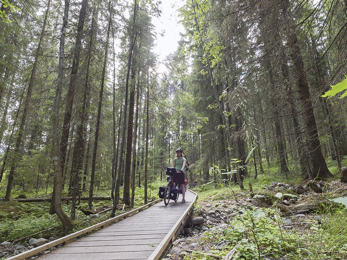 Der Weg durch den Skuleskogen Nationalpark fängt vielversprechend an