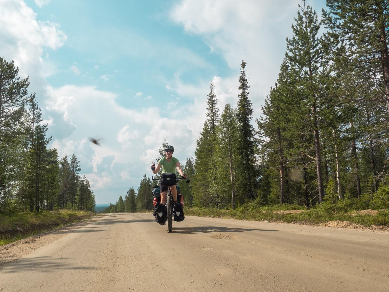 In Lappland sind Insekten unsere täglichen Begleiter