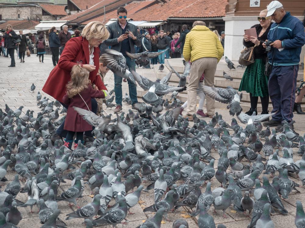 Tauben beim Baščaršija Marktplatz