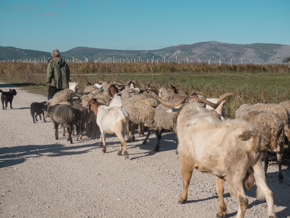 Zwischen Schafen und Ziegen