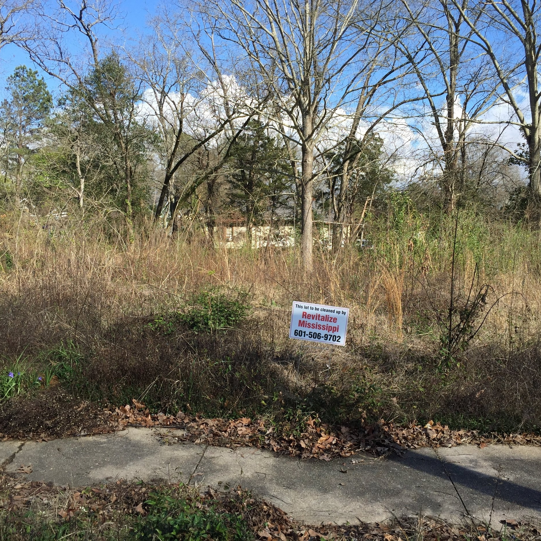 LOT CLEARINGS -