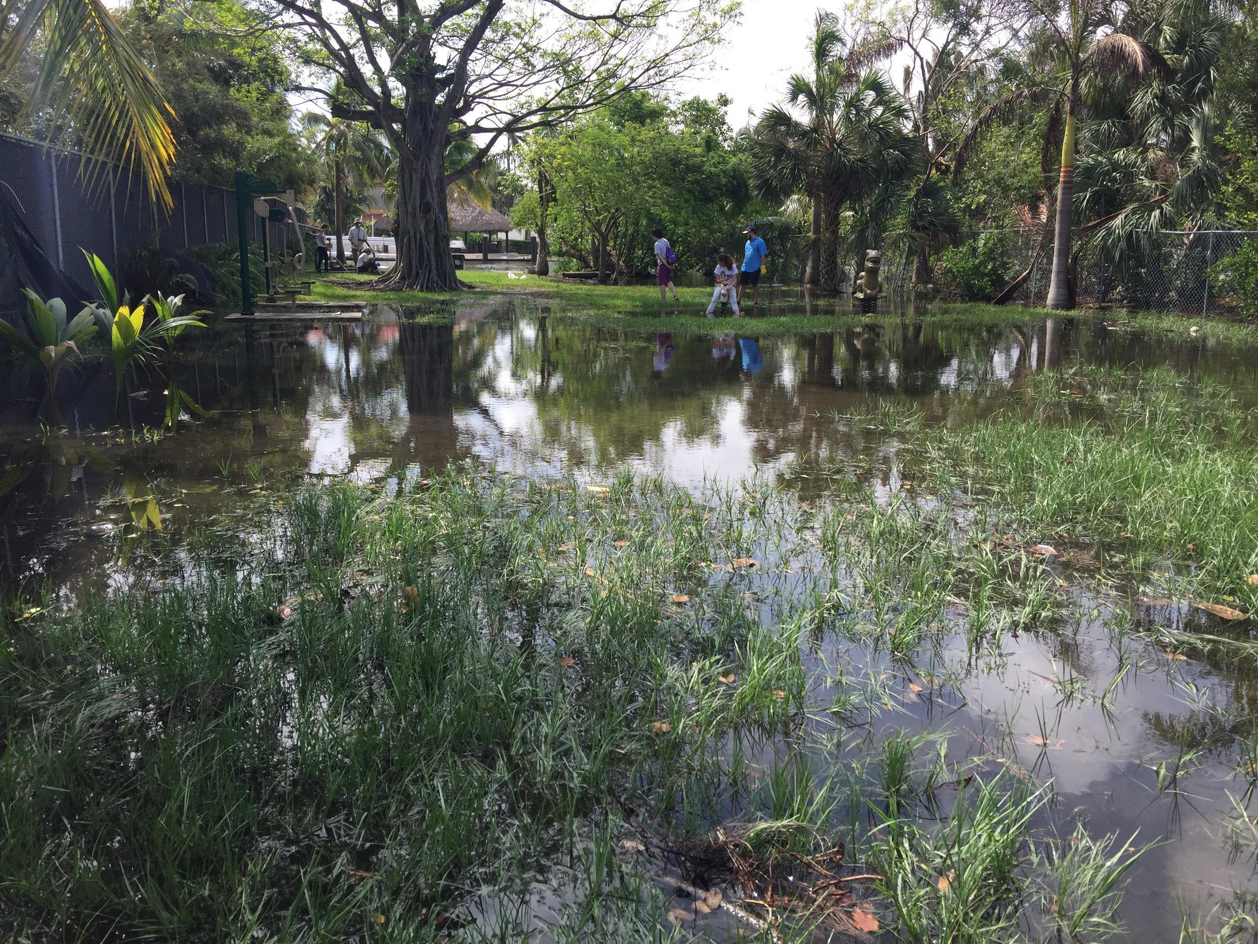 Little River Pocket Park - during king tide