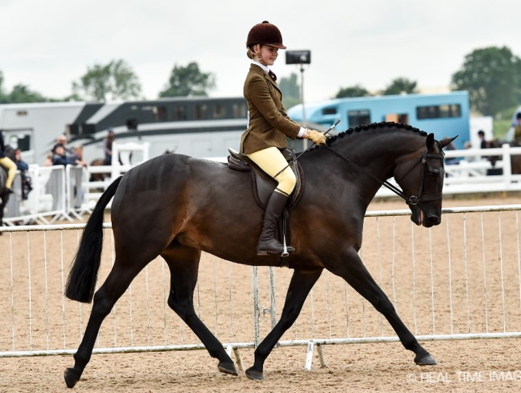 The 5 year old Geminis Classic Valentine and Martha Jobling-Purser on their way to winning in their first outing together at the Northern Show on the 6th of July