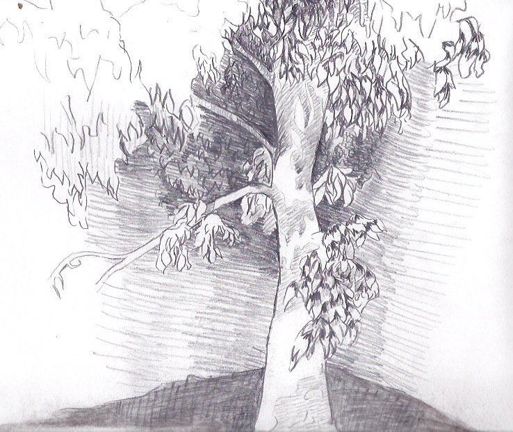"""Pencil on paper, 8"""" x 10"""", 2014"""