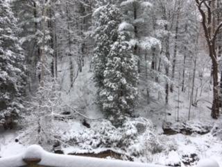 WinteryBackyard.JPG