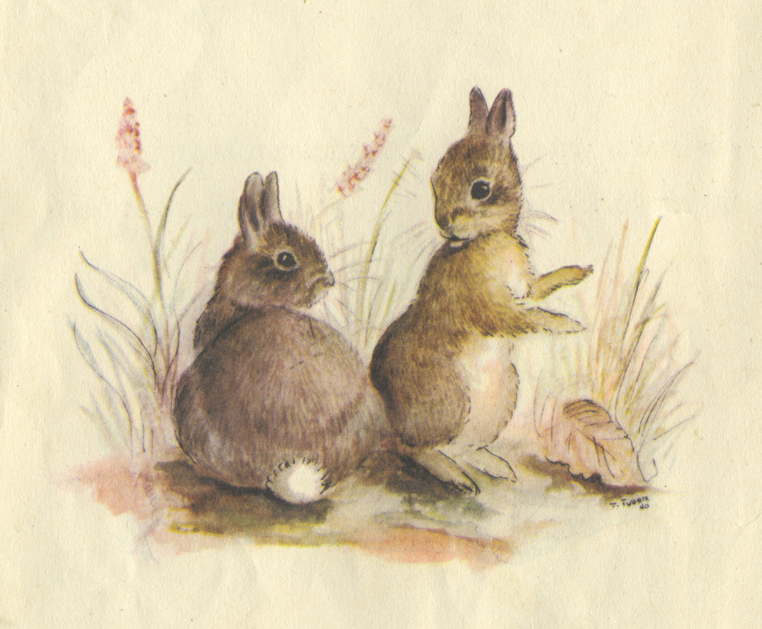 Illustration from the Tasha Tudor book